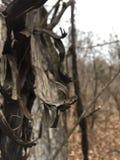 Ciemnego czerni uszkadzająca drzewna barkentyna, zakończenie las jesieni Obrazy Royalty Free