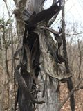 Ciemnego czerni uszkadzająca drzewna barkentyna las jesieni Fotografia Stock