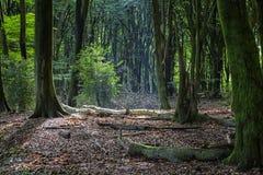 ciemnego drewna Zdjęcia Stock