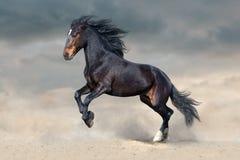 Ciemnego konia bieg Fotografia Stock