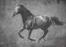 Ciemnego sporta końscy bieg galopują na wolności W czarny i biały artystycznym traktowaniu fotografia royalty free