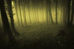 ciemnej mgły lasowy ranek wydźwignięcie Obraz Royalty Free