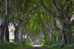 Ciemni żywopłoty drogowi obraz royalty free