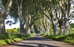 Ciemni żywopłoty, Stara aleja Bukowi drzewa, Armoy, Antrim, Północny - Ireland Zdjęcie Royalty Free