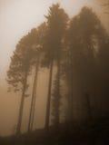 ciemni drzewa Obrazy Royalty Free