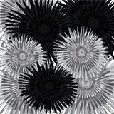 Ciemni i jaskrawi dandelions Obrazy Royalty Free