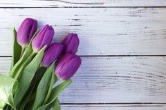 Ciemni lili tulipany pakuje na białym drewnianym tle w klingerycie obrazy royalty free