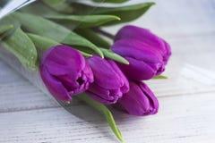 Ciemni lili tulipany pakuje na białym drewnianym tle w klingerycie zdjęcia stock