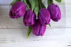 Ciemni lili tulipany pakuje na białym drewnianym tle w klingerycie fotografia royalty free