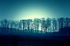 Ciemni nieżywi zim drzewa, niebo i Obrazy Stock