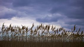 Ciemni nieba przez bagno Obrazy Royalty Free