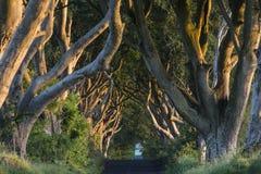 Ciemni żywopłoty Północni - Ireland - okręg administracyjny Antrim - Obrazy Royalty Free