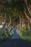 Ciemni żywopłoty Północni - Ireland - okręg administracyjny Antrim - Obraz Royalty Free