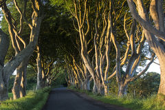 Ciemni żywopłoty Północni - Ireland - okręg administracyjny Antrim - Zdjęcie Stock