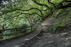 Ciemniutka ścieżka przy Burrs kraju parkiem, Zakopuje zdjęcia royalty free