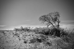 Ciemności puści drzewa Zdjęcia Royalty Free