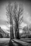 Ciemności drzewa Fotografia Royalty Free