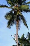 Ciemnoskórzy Afrykańscy ludzie machają jego rękę od wierzchołka palma. Obrazy Stock
