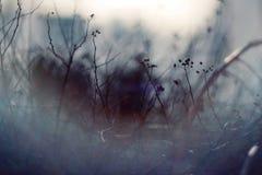 Ciemny abstrakcjonistyczny zamazany tło z gałąź rośliny fotografia stock