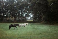 Ciemny brązu i białego koń fotografia royalty free