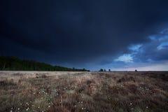 Ciemny burzowy niebo nad bagnem z bawełnianą trawą obrazy stock