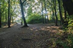 Ciemny gęsty park z podeptanymi pedestrians wlec między drzewami obrazy royalty free