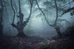 Ciemny jesień las w mgle piękna naturalnego krajobrazu zdjęcie stock