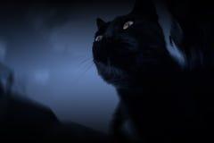 Ciemny kot Zdjęcia Stock