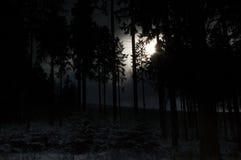 ciemny las Obraz Stock