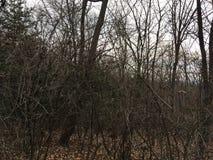Ciemny las, drzewa las jesieni Zdjęcie Royalty Free