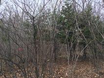 Ciemny las, drzewa las jesieni Fotografia Stock