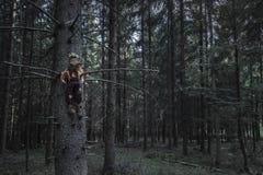Ciemny las i strach na wróble w wysuszonym drzewie zdjęcia royalty free