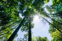 Ciemny las tropikalny Zdjęcie Royalty Free