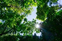 Ciemny las tropikalny Fotografia Stock