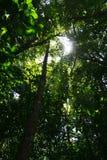Ciemny las tropikalny Zdjęcia Royalty Free
