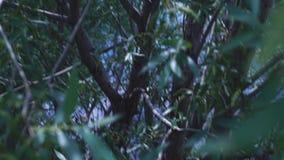 Ciemny las w głębiach ulistnienie i halny strumień zbiory wideo
