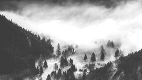 Ciemny las w jesień czasie fotografia royalty free