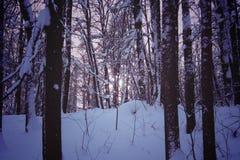 Ciemny las w zimy nocy Fotografia Stock