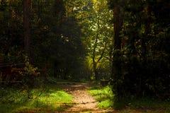 Ciemny las z ścieżką, ponura jesień zdjęcie stock