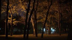 Ciemny las z sylwetkowymi drzewami iluminującymi lampionem przy jawnym parkiem przy nocą Ppeople przy tłem zbiory