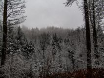 Ciemny las zakrywający w śniegu zdjęcia royalty free