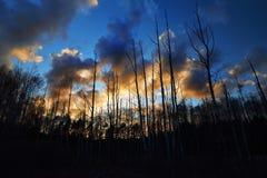 Ciemny lasowy bagno Zdjęcie Royalty Free