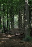 Ciemny lasowy sposób obrazy royalty free