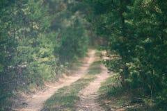 Ciemny markotny las zdjęcie stock