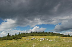 ciemny meadow niebo Obrazy Royalty Free