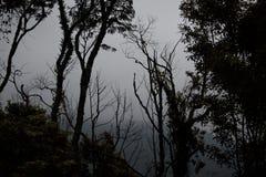 ciemny miejsce Fotografia Royalty Free