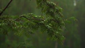 Ciemny nieżywy las zbiory