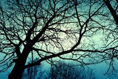 Ciemny nieżywy zimy drzewo Zdjęcie Stock
