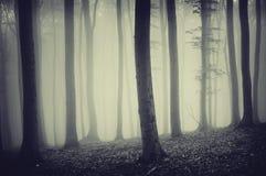 Ciemny niesamowity las z dziwaczną straszną łuną i mgłą fotografia royalty free