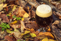 Ciemny piwo w jesień lesie Obrazy Stock
